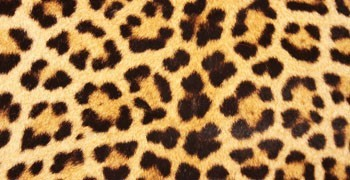 Mascarillas de diseño animal print